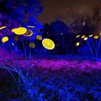 Winterlichter im Palmengarten Frankfurt (10)