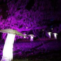 Winterlichter im Palmengarten Frankfurt (7)